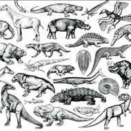 Moschops - Skratch Fossils