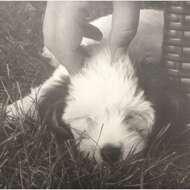 Various - Schlafende Hunde