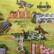 Boxhamsters - Black Beauty Farm