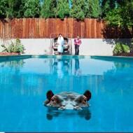 Sparks - Hippopotamus (Picture Disc)